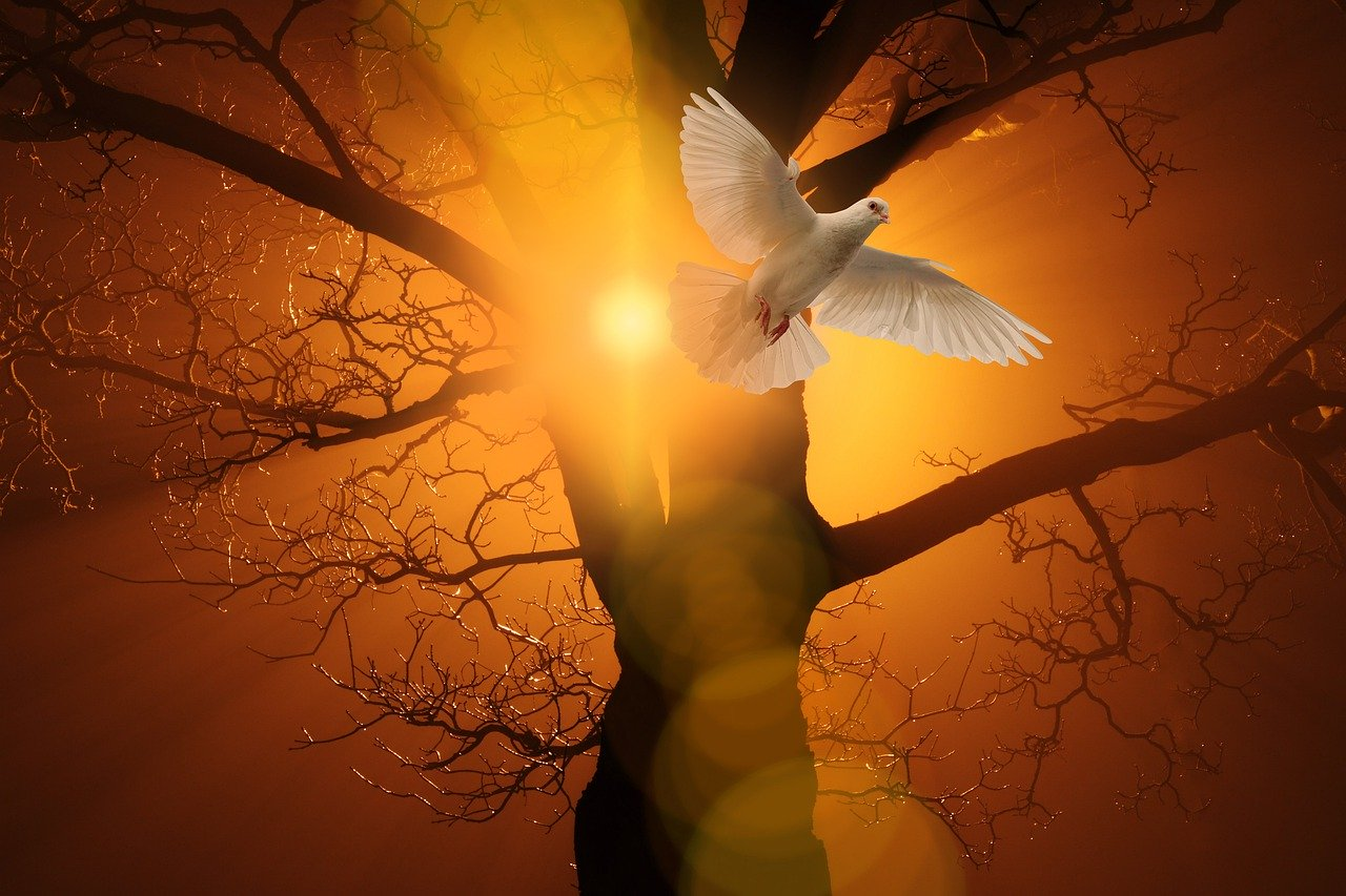 Dove flying, as symbol of the holy spirit